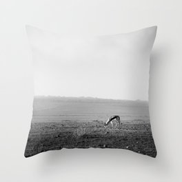 Lone Springbok grazing in African savanna Throw Pillow
