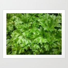 parsley Art Print