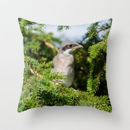 Fledgling Loggerhead Shrike Throw Pillow