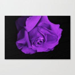 Rose violette purple Canvas Print