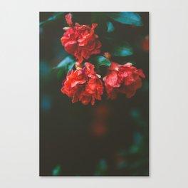 Pomegranate Study, No. 2 Canvas Print