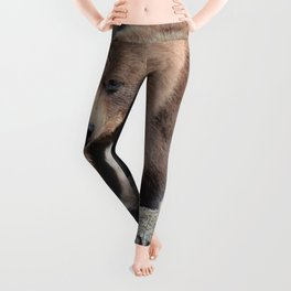 Alaskan Grizzly Bear - Spring Leggings
