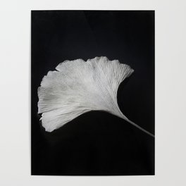 Ginkgo on black Poster