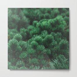 Mops pine background Metal Print