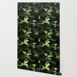 Botanical dragon fly Wallpaper