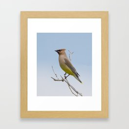 Cedar Waxwing On The Audobon Trail Framed Art Print