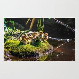 Mallard ducklings on a stone Rug