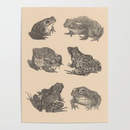 Naturalist Frogs Poster
