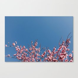 #cherryblossomobsession Canvas Print