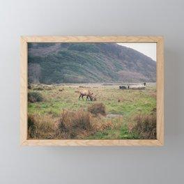 Lost Coast Elk Framed Mini Art Print