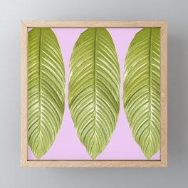 Three large green leaves on a pink background - vivid colors Framed Mini Art Print
