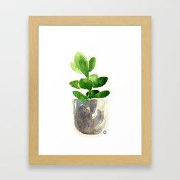 Simple Jadeplant Framed Art Print