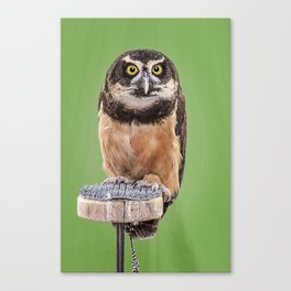 Hoo are you looking at? Canvas Print