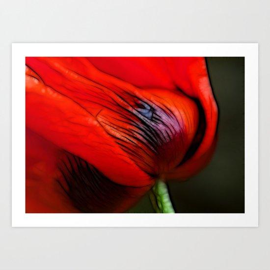 Poppy Day Art Print