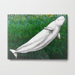 Beautiful beluga whale in the ocean Metal Print