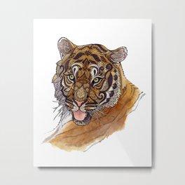 Immature Tiger Metal Print