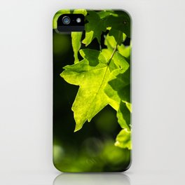 May sunshine in the tree leaf iPhone Case