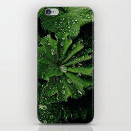 Dew On Rose Scented Geranium Leaves iPhone Skin