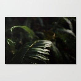 sword fern 2 Canvas Print