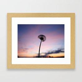 A dandelion Framed Art Print