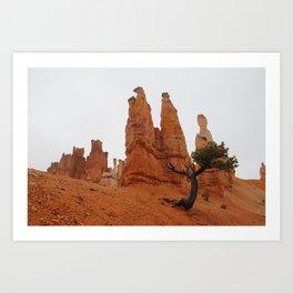 Ancient Bristlecone Pine (Bryce Canyon National Park) Art Print