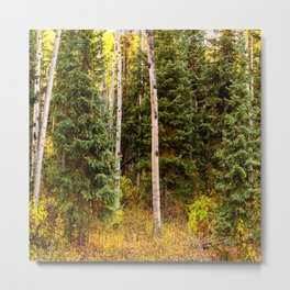 Colorado Autumn Wonder Panorama #2 by OLena Art Metal Print