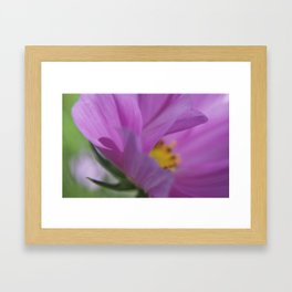 Cosmos Pink (4) Framed Art Print