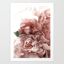 Blush Pink Floral Art Print