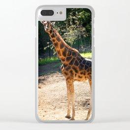 Baringo Giraffe Clear iPhone Case
