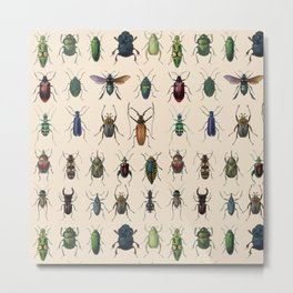 Insects, flies, ants, bugs Metal Print