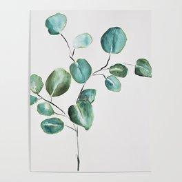 Eucalyptus leaves, illustration, botanical Poster