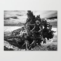 rebel Canvas Prints featuring rebel by alessandro di sessa
