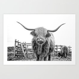 Highland Cow in a Fence Black and White Art Print