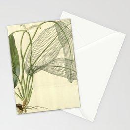 Skeleton Leaf Stationery Cards