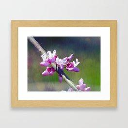 Redbud Flowers Framed Art Print