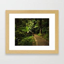Tropical Forest Path Framed Art Print