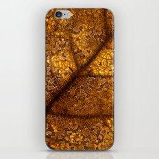 illuminated leaf iPhone & iPod Skin