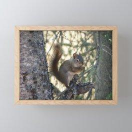 Soldotna Red Squirrel Framed Mini Art Print