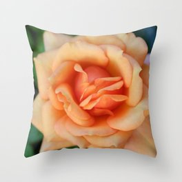 Single rose flower blooming Throw Pillow