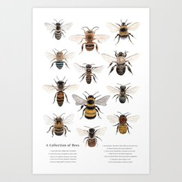 A Collection of Bees Kunstdrucke