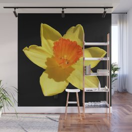 Spring Daffodil Isolated On Black Wall Mural