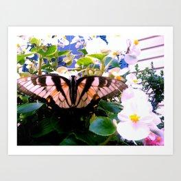 Summer;flies Art Print