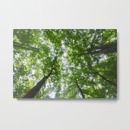 Up Through The Trees Metal Print