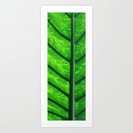 Leave of a palm Kunstdrucke