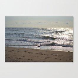 Seagull Watch Canvas Print