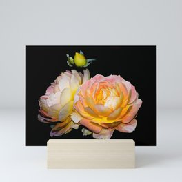 Roses as vibrant as the sunrise Mini Art Print