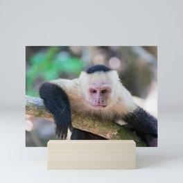 White headed capuchin monkey Mini Art Print