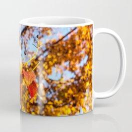 Fall Leaves Photography Print Coffee Mug