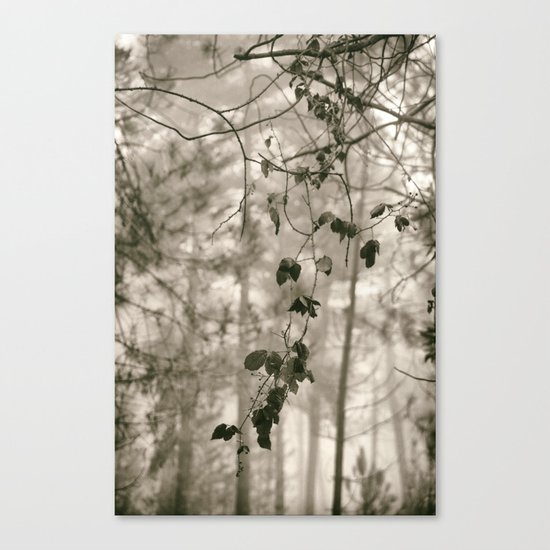 """""""Into the woods VI""""  Canvas Print"""