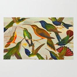 Translate Album de aves amazonicas - Emil August Göldi - 1900 Colorful Hummingbirds Rug